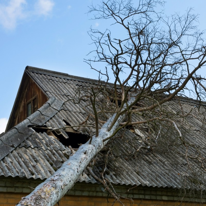 roof damage from a tree